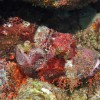 Scorpionfish - somewhere?!