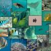Seychelles Marine Life © WiseOceans