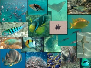 Fishies fishies fishies...