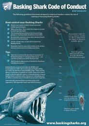 basking shark1
