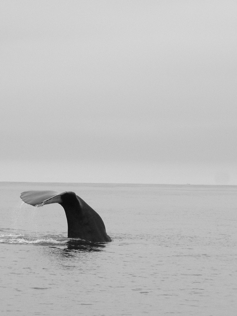 © Sarah Jackson at Planet Whale