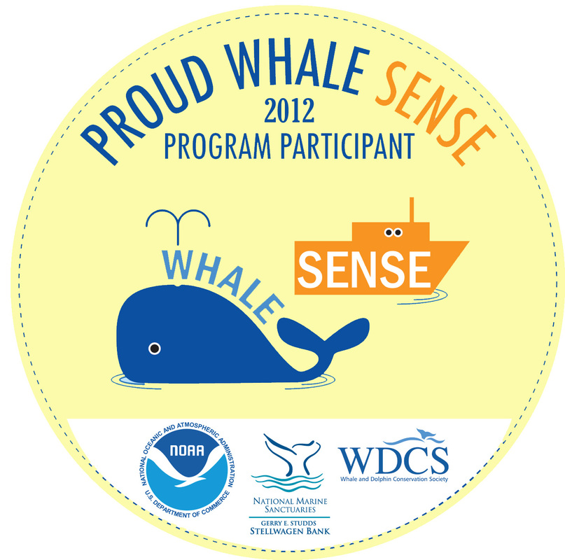 whale advice 2