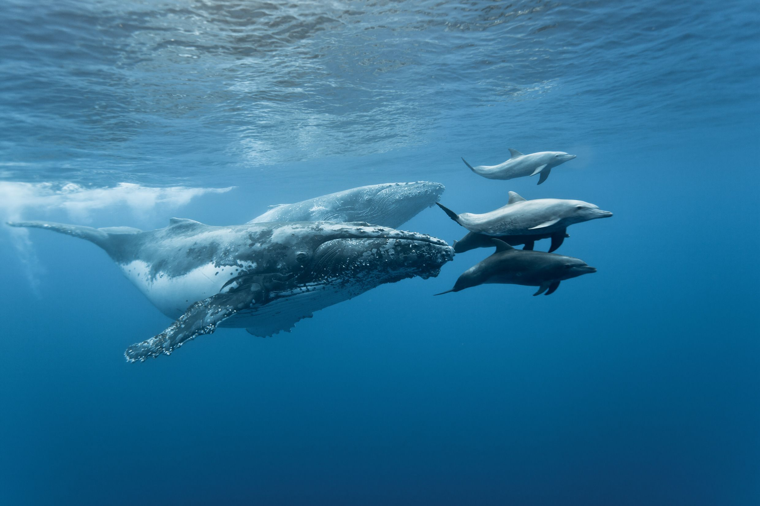 Whales & Dolphins © Unknown
