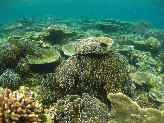 Healthy Coral © WiseOceans/Abbie Hine