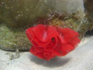 Nudibranch eggs ©WiseOceans