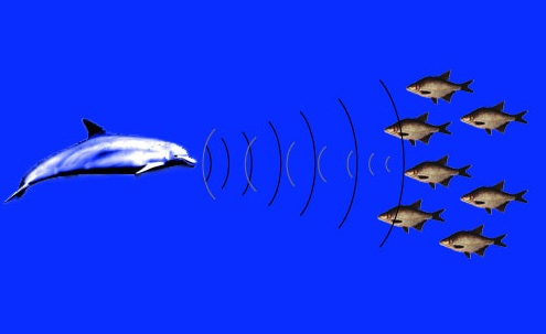 Whales dolphins wiseoceans for What sound does a fish make