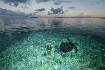 © Thomas P. Peschak from his book Lost World; The Marine Realm of Aldabra & The Seychelles