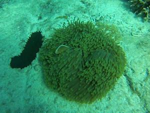 1 Clownfish