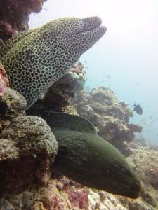2 Moray eels