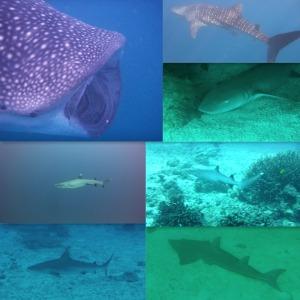 7 Sharks