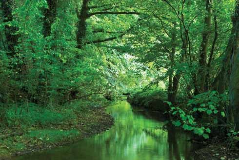 IFM Conference: Forestry and fisheries – where next?WiseOceans