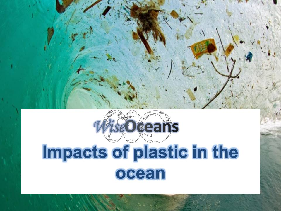 Impacts of plastic bags in the ocean