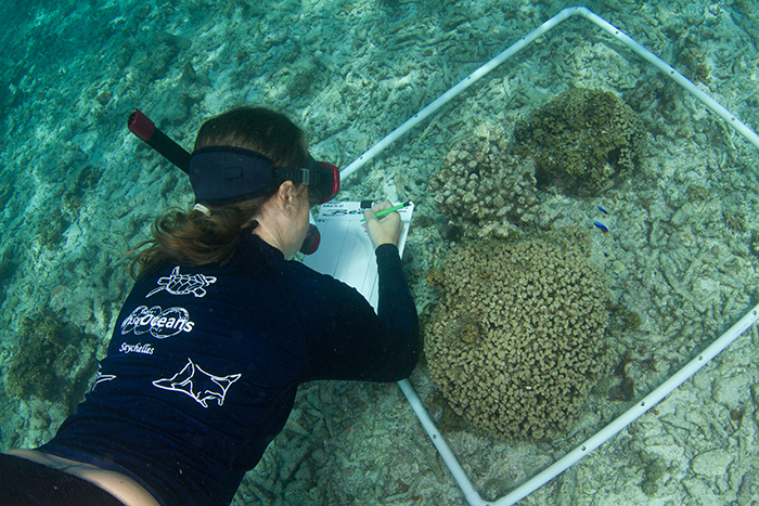 Please Mention WiseOceans When Applying For Any Marine Conservation Job That You Have Seen On Thanks