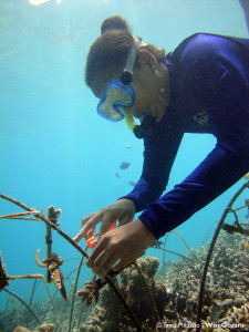 Annie working at coral nursery, Seychelles Oct 2015 © TM WiseOceans (2)