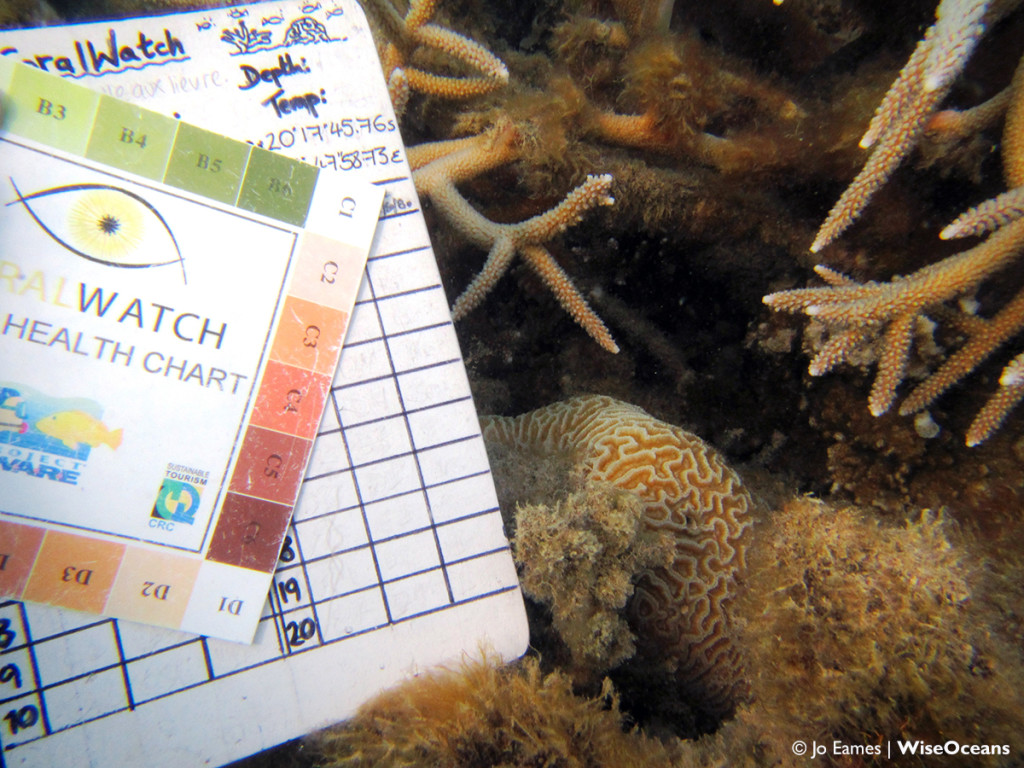 CoralWatch 3, FSRM, Sept 2015 © JE WiseOceans