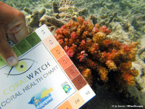 CoralWatch, FSRM, Sept 2015 © JE WiseOceans