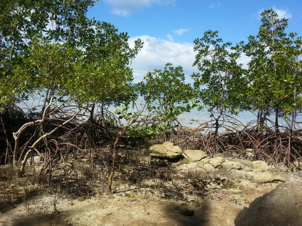 Philippines-Scenic-Marine-Land-Mangroves-Tabugon-2015