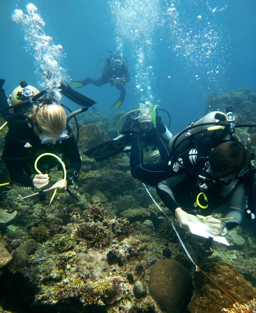 Philippines-Surveying-Marine-Aquatic-Diving-Survey team-Santa Paz Sur-2013