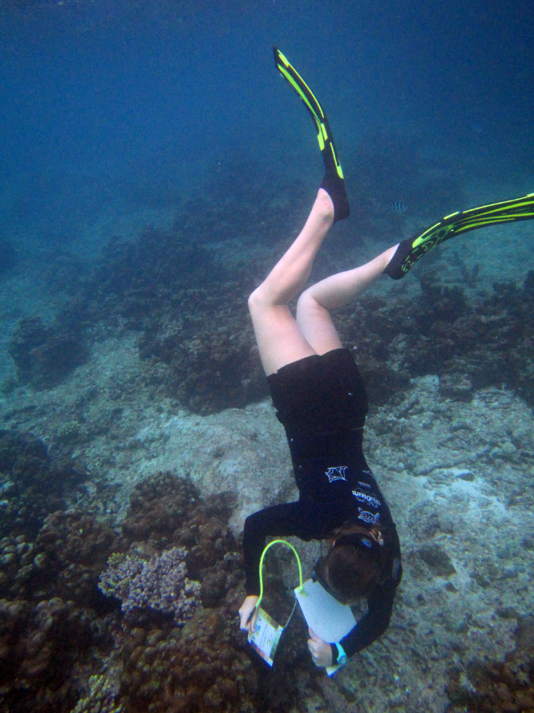 Carrying out a CoralWatch survey
