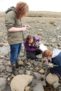 Shoresearch survey at Earnse Bay on Walney Island, Barrow-in-Furness, Cumbria