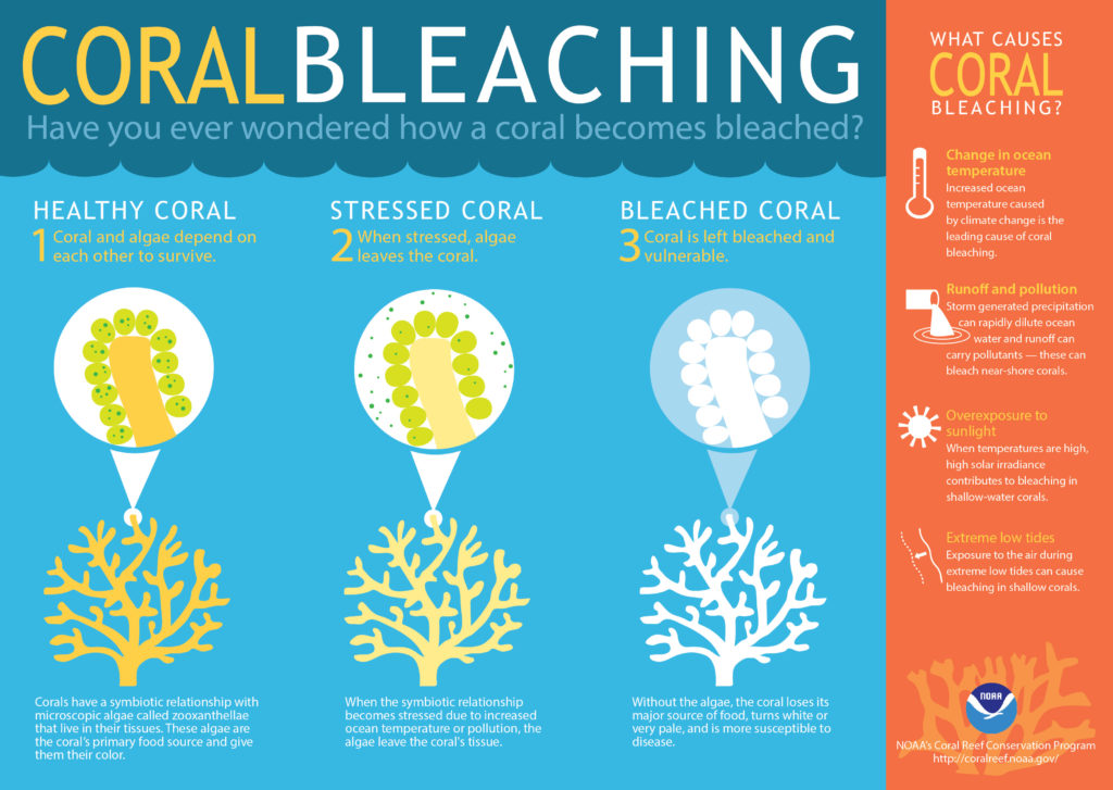 A useful graphic showing the ways corals can become bleached, by NOAA's Coral Reef Conservation programme