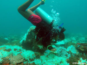 Annie on a fish survey, Baie Ternay, Seychelles