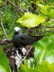 Bird on Bird Island, Seychelles © Krishna Ashok