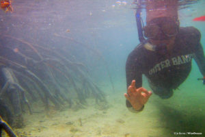 Rick snorkeling in the mangrove