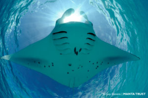 reef-manta-ray-spot-patterns-3-veyofushi-reef-baa-atoll-maldives-guy-stevens-manta-trust-o-wm