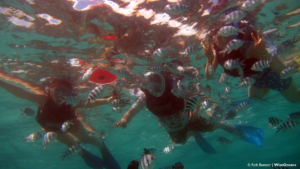 happy-snorkelers-mauritius-dec-2016-rb-wiseoceans