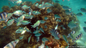 shoal-of-damselfish-mauritius-dec-2016-rb-wiseoceans