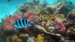 the-anemone-garden-eau-bleu-mauritius-dec-2016-rb-wiseoceans