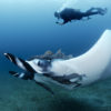 Andrea with giant manta Copyright Jose Alejandro Alvarez