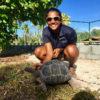 AldabraTortoises