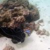 Lois underwater